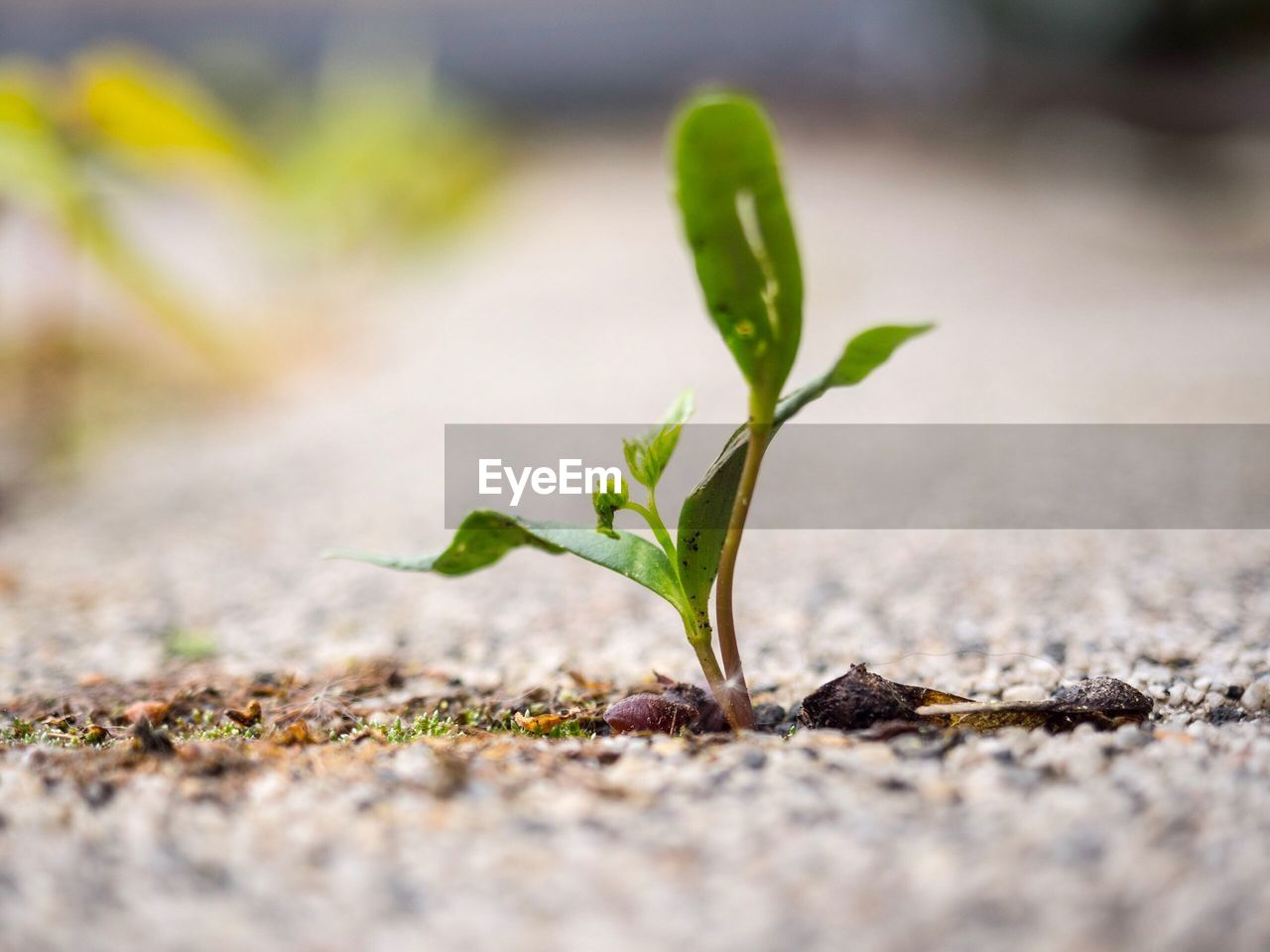 young plant, growth, selective focus, close-up, green color, nature, beginnings, new life, no people, plant, day, fragility, outdoors, leaf, beauty in nature, freshness