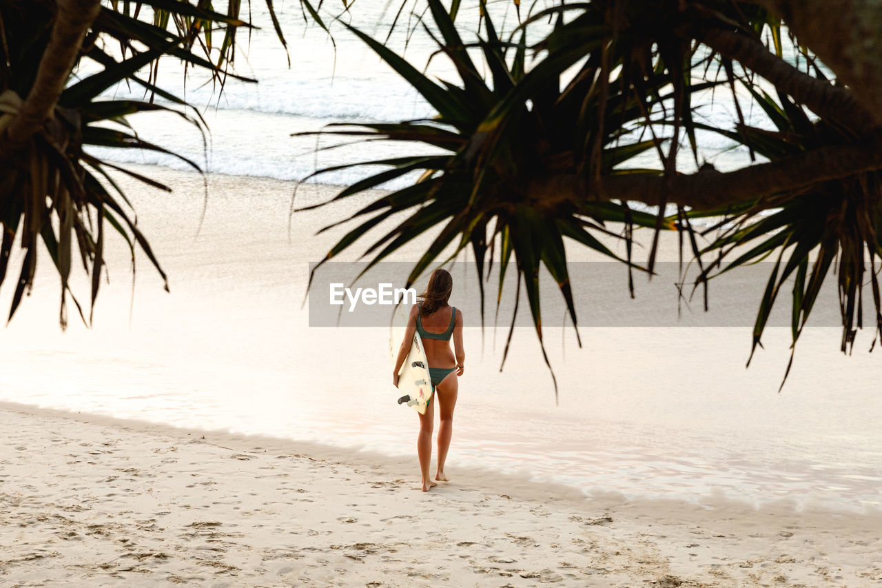 land, beach, tree, sea, palm tree, tropical climate, water, full length, sand, one person, leisure activity, nature, lifestyles, real people, rear view, plant, walking, holiday, vacations, trip, outdoors