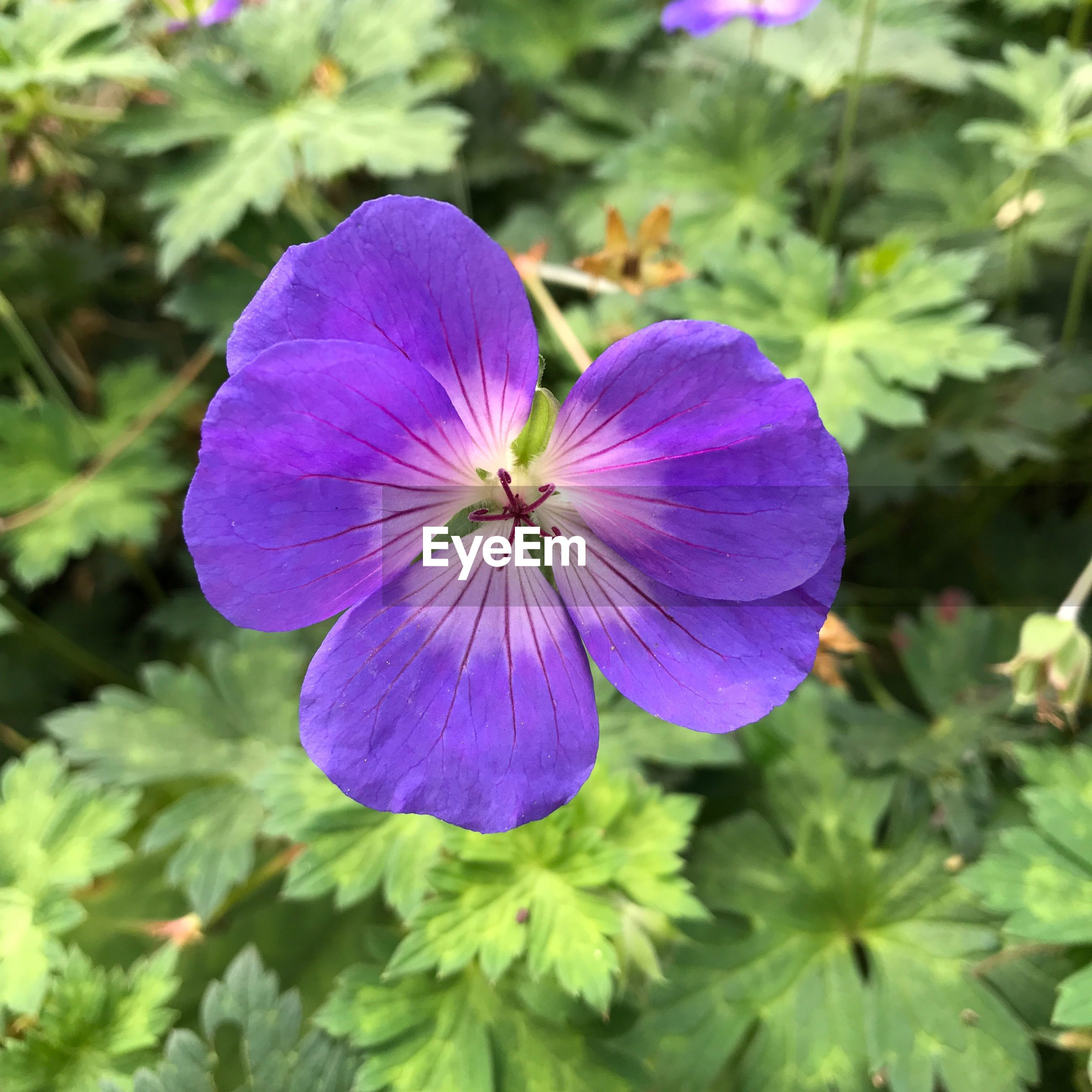 CLOSE-UP OF FRESH PURPLE FLOWER BLOOMING IN NATURE