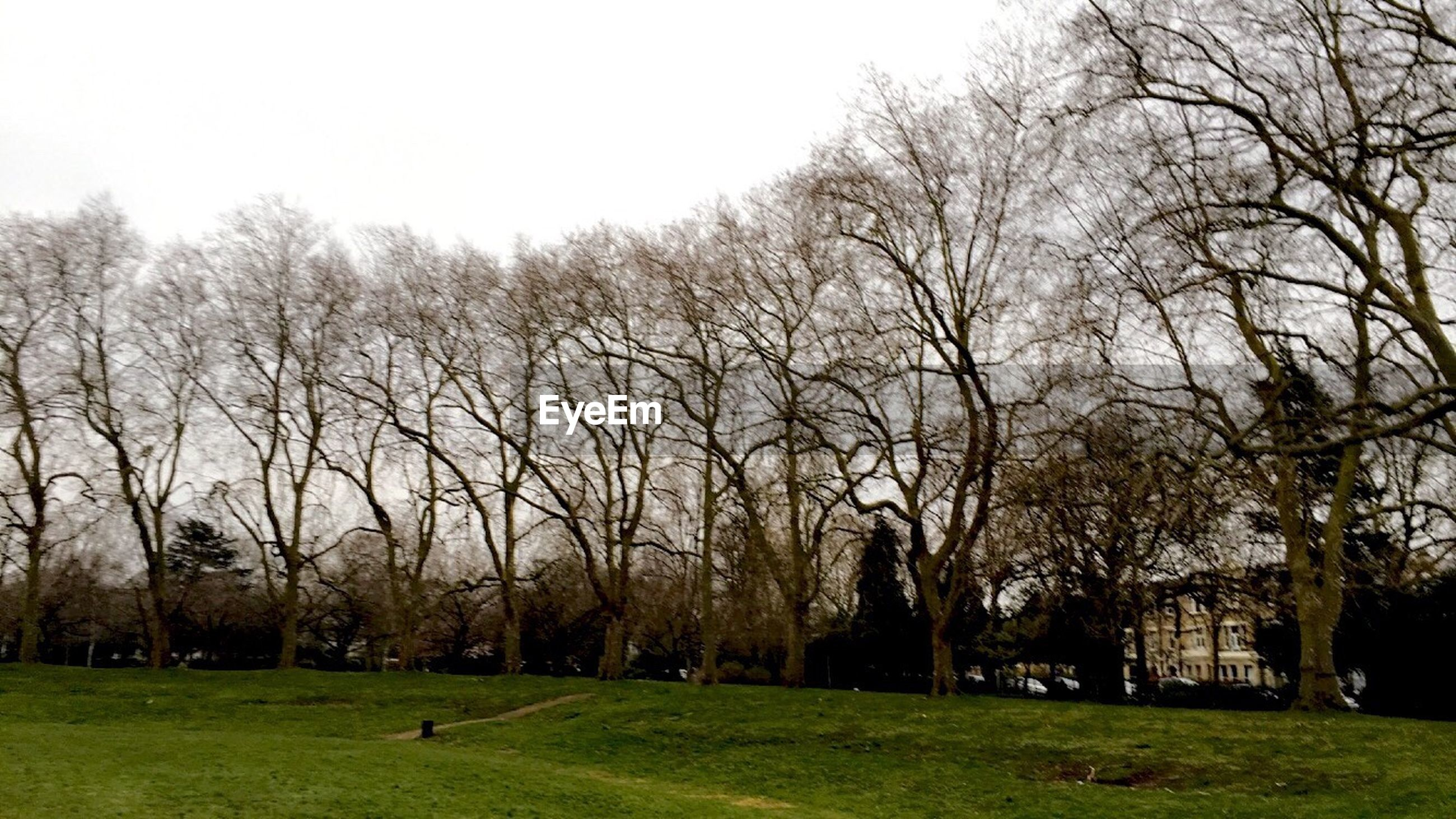 grass, tree, bare tree, field, architecture, built structure, building exterior, grassy, clear sky, park - man made space, landscape, lawn, green color, nature, tranquility, branch, sky, growth, park