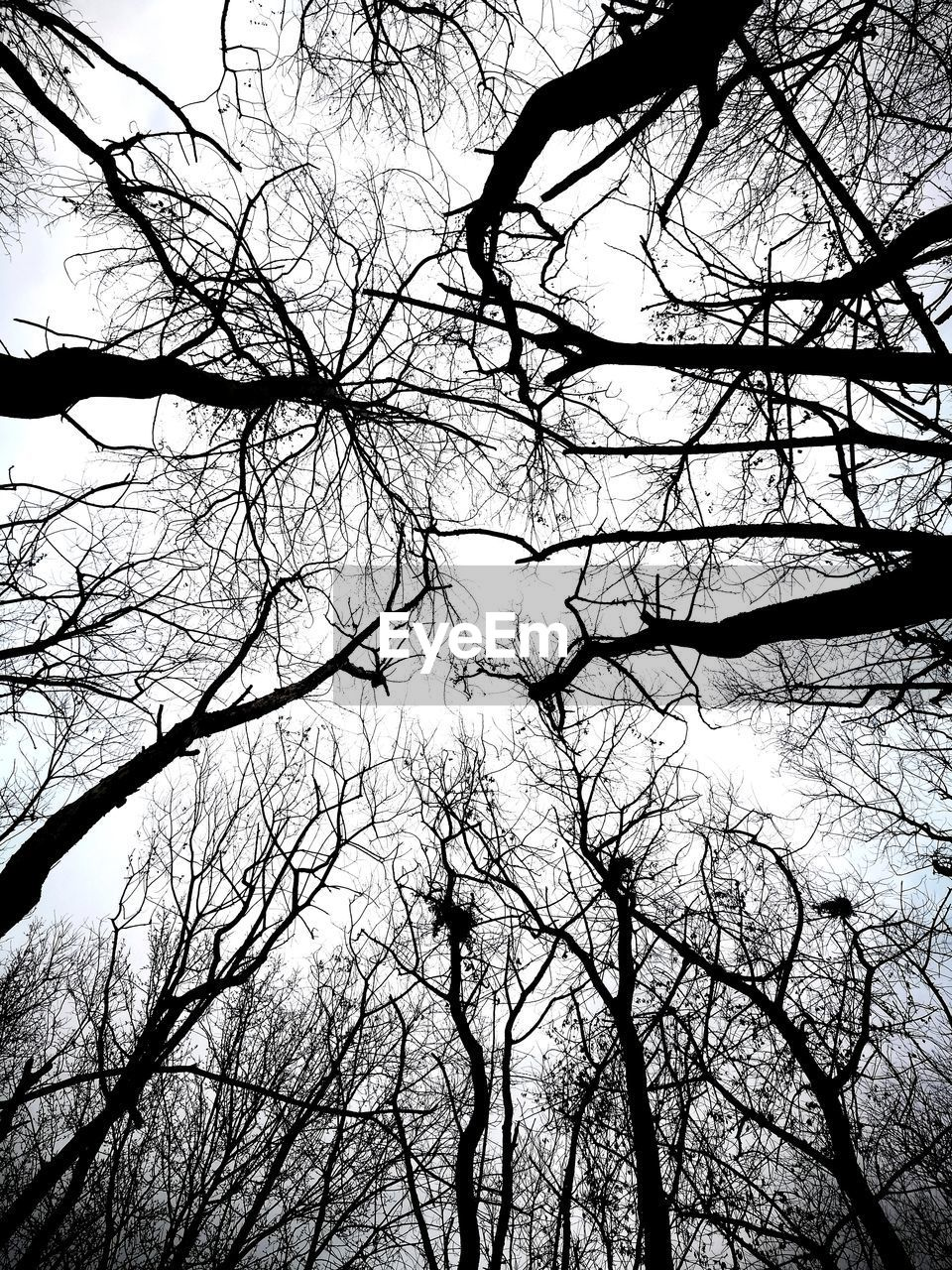 tree, branch, bare tree, plant, low angle view, sky, silhouette, tranquility, no people, nature, beauty in nature, forest, outdoors, scenics - nature, day, tranquil scene, trunk, tree trunk, tree canopy, growth, directly below