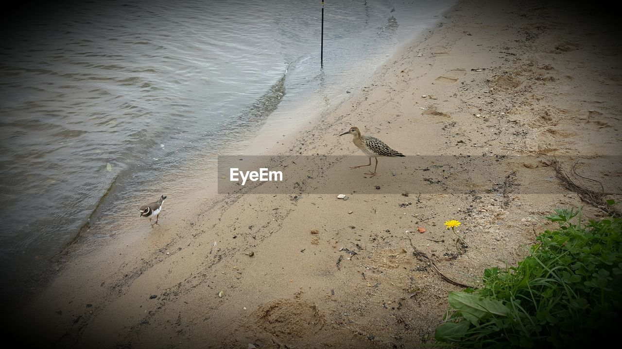 bird, high angle view, animal themes, one animal, dog, sand, water, animals in the wild, nature, no people, mammal, outdoors, day
