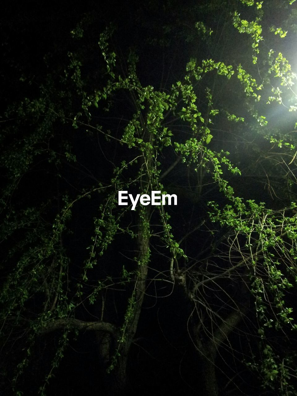 night, growth, plant, nature, no people, green color, tree, outdoors, forest, beauty in nature, branch, close-up