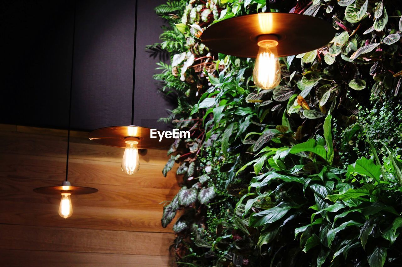 Low Angle View Of Illuminated Lamps By Plant In Restaurant