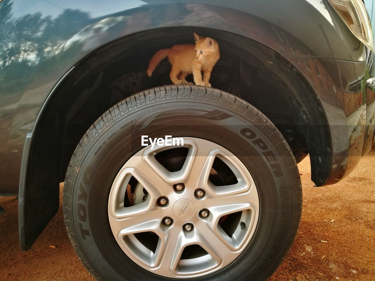 tire, car, transportation, wheel, land vehicle, mode of transport, one animal, 4x4, off-road vehicle, day, animal themes, toy car, no people, outdoors, mammal