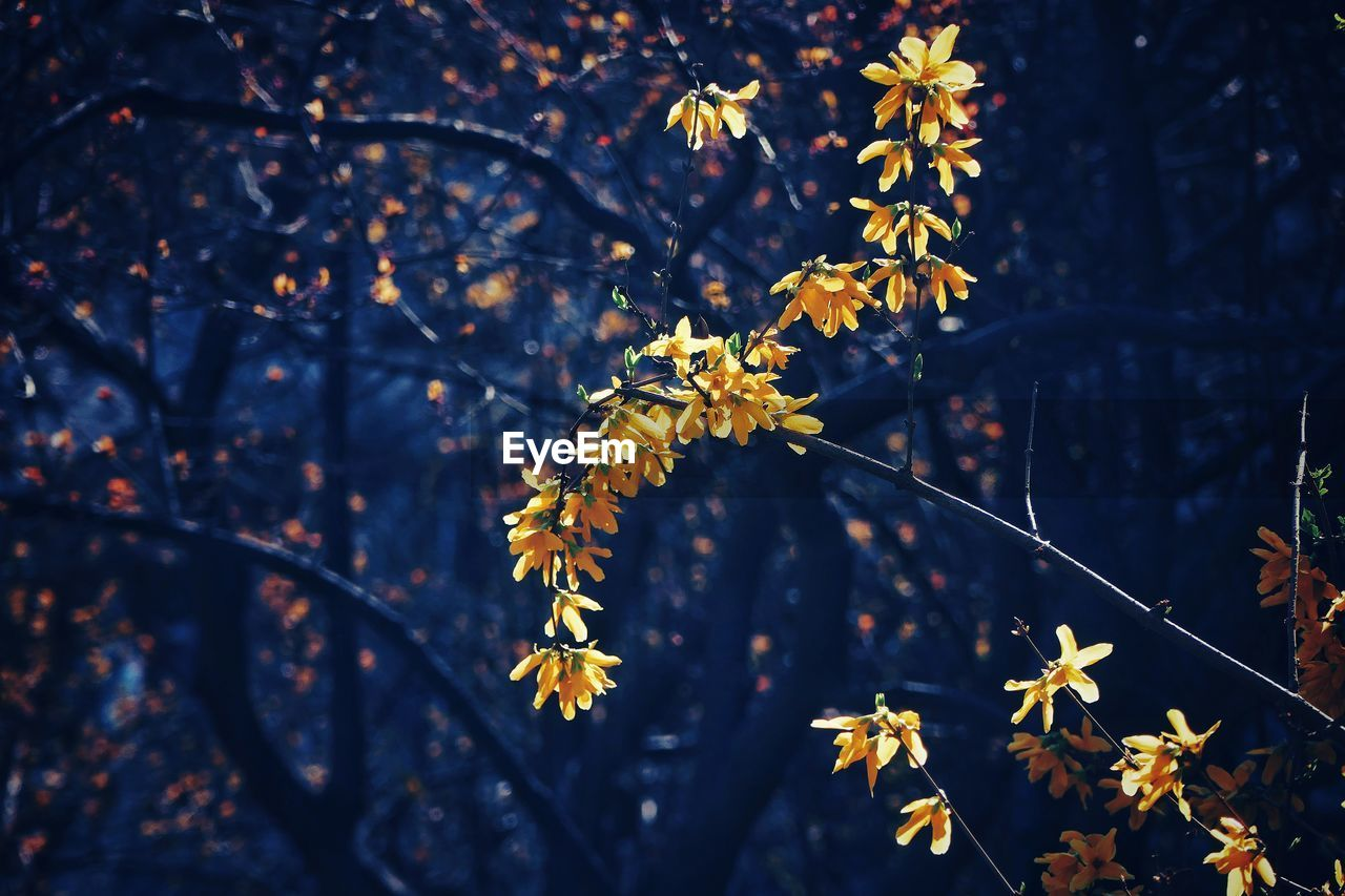 plant, growth, beauty in nature, tree, nature, plant part, focus on foreground, leaf, fragility, vulnerability, day, autumn, flower, branch, outdoors, change, no people, close-up, flowering plant, freshness, maple leaf, leaves, autumn collection