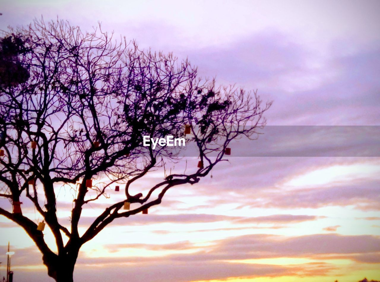 sky, plant, tree, beauty in nature, cloud - sky, sunset, nature, tranquility, branch, silhouette, low angle view, scenics - nature, no people, bare tree, tranquil scene, outdoors, growth, pink color, day, idyllic, purple