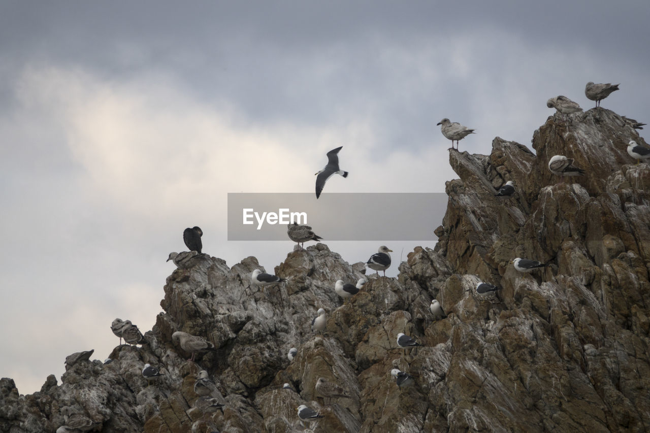 Low Angle View Of Birds On Rock