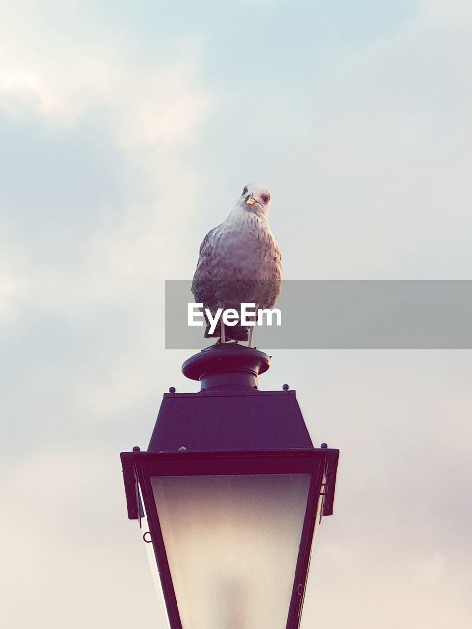 bird, animal themes, animal, animal wildlife, perching, one animal, sky, vertebrate, animals in the wild, nature, low angle view, day, cloud - sky, no people, outdoors, seagull, bird of prey, dove - bird, metal, zoology, eagle