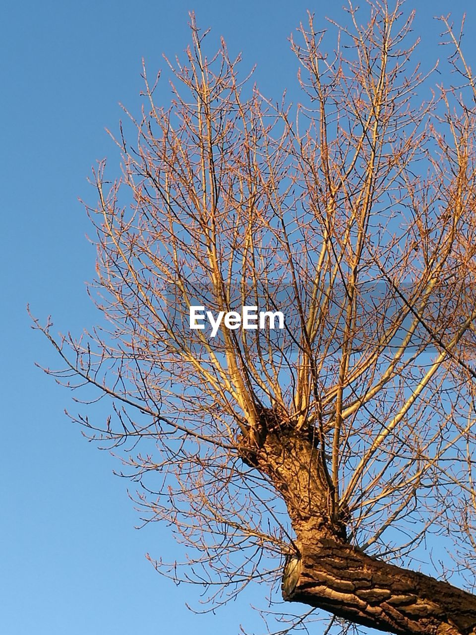 tree, bare tree, branch, low angle view, nature, clear sky, beauty in nature, blue, day, tranquility, outdoors, tree trunk, no people, growth, sky, autumn