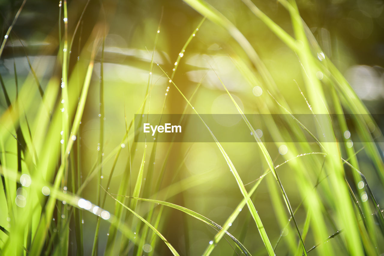 growth, plant, beauty in nature, close-up, green color, nature, selective focus, grass, day, fragility, vulnerability, no people, blade of grass, freshness, drop, outdoors, tranquility, water, field, dew