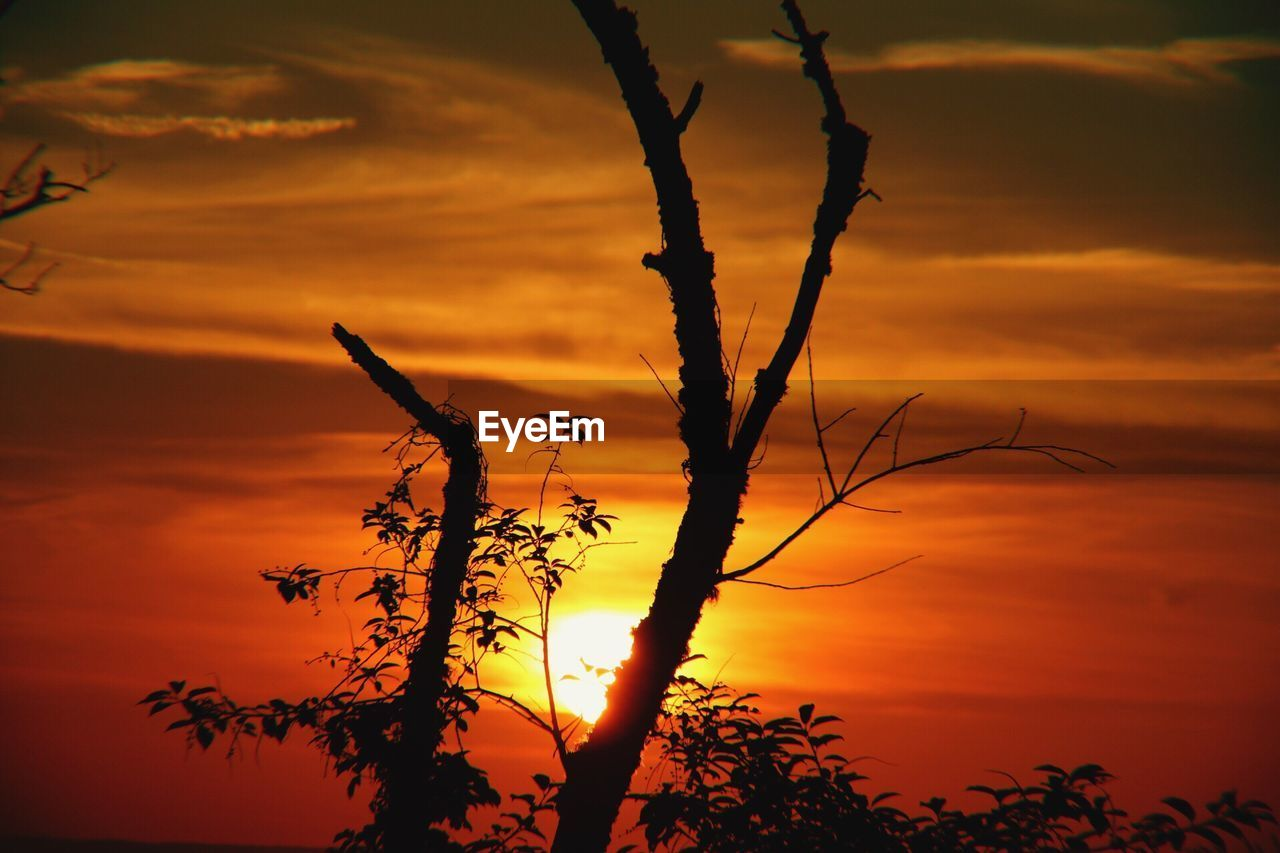 sunset, sky, orange color, cloud - sky, beauty in nature, silhouette, plant, tranquility, nature, scenics - nature, no people, growth, tranquil scene, tree, outdoors, close-up, branch, idyllic, dramatic sky, focus on foreground