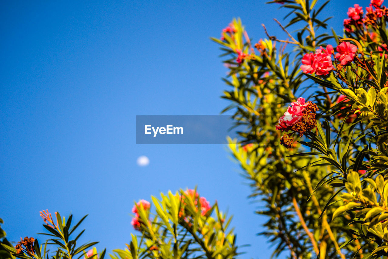 Low Angle View Of Tree Bearing Flowers Against Clear Sky