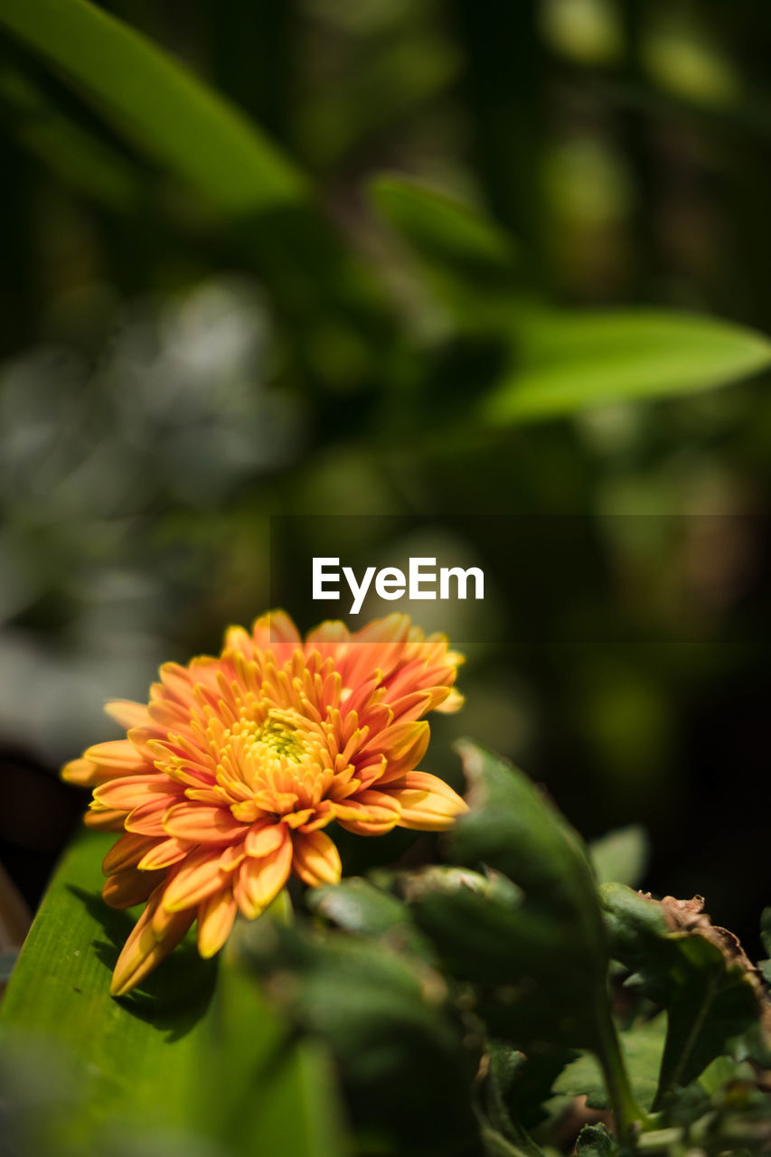 flower, nature, growth, beauty in nature, plant, no people, freshness, outdoors, close-up, fragility, flower head, blooming, day
