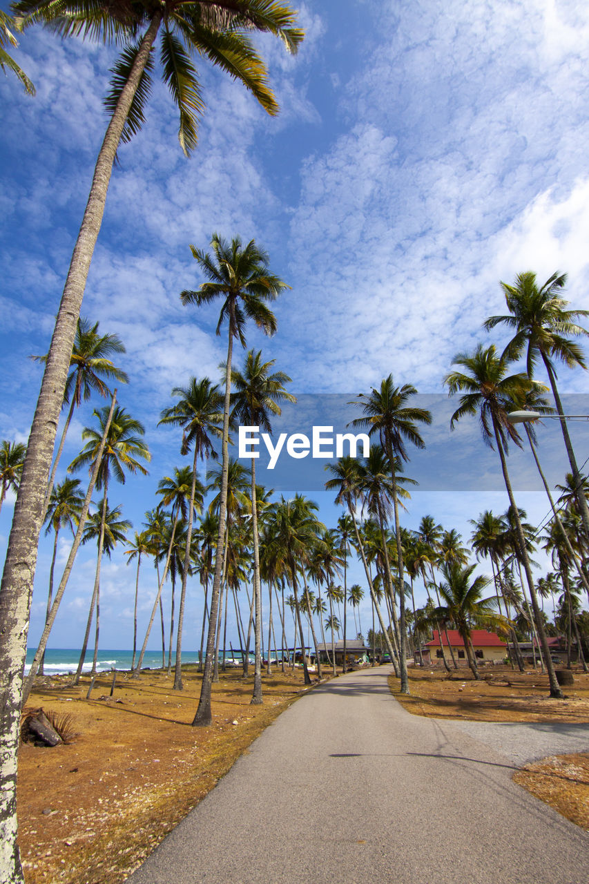 tree, palm tree, plant, tropical climate, sky, direction, road, the way forward, transportation, beauty in nature, nature, cloud - sky, growth, diminishing perspective, no people, land, day, tranquility, tranquil scene, scenics - nature, outdoors, coconut palm tree, treelined, tropical tree