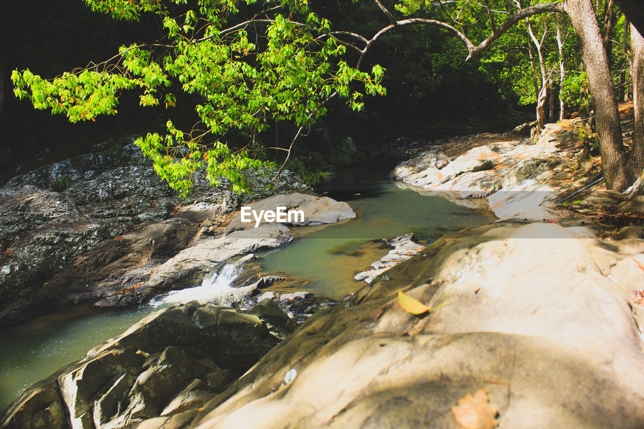water, rock - object, river, nature, plant, beauty in nature, day, no people, tranquility, waterfall, outdoors, forest, tranquil scene, scenics, tree, growth