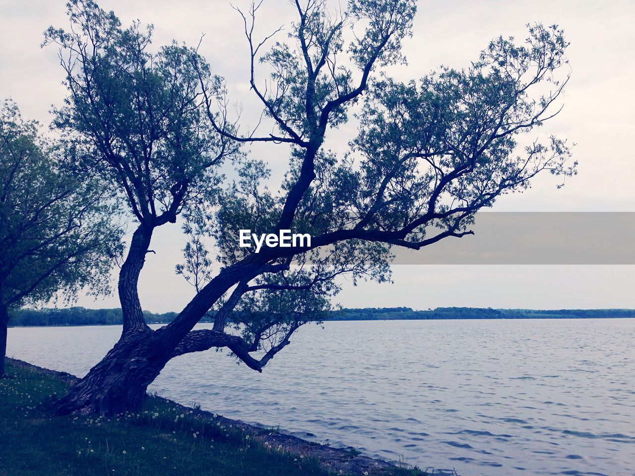 tree, tranquility, nature, water, sky, sea, beauty in nature, tranquil scene, scenics, outdoors, no people, branch, horizon over water, day, lone