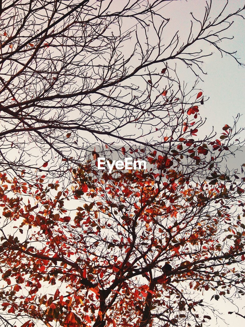 branch, beauty in nature, tree, nature, low angle view, flower, growth, day, no people, outdoors, tranquility, sky, springtime, freshness, fragility