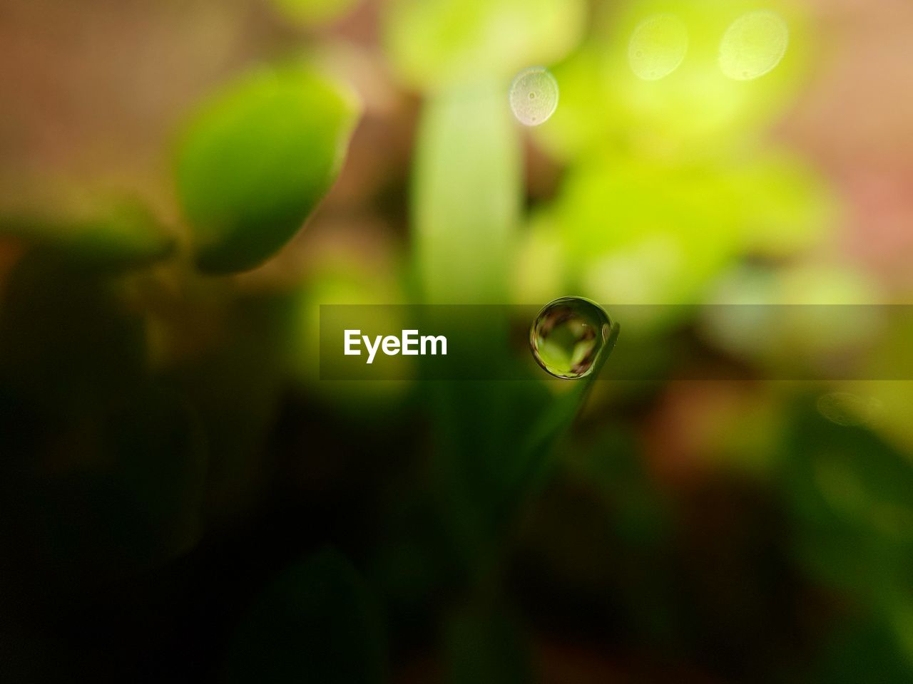 nature, plant, growth, focus on foreground, green color, drop, water, beauty in nature, selective focus, no people, close-up, outdoors, fragility, day, freshness