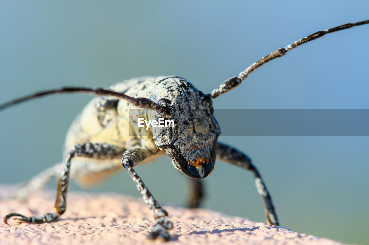 animal themes, one animal, animal, animal wildlife, animals in the wild, focus on foreground, close-up, day, invertebrate, insect, nature, animal body part, selective focus, no people, sunlight, outdoors, animal antenna, animal wing, sky, clear sky, animal eye