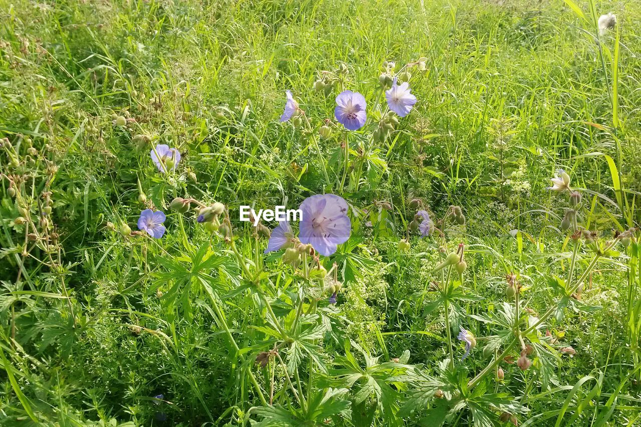 grass, flower, growth, nature, plant, field, beauty in nature, no people, outdoors, green color, day, fragility, flower head, freshness