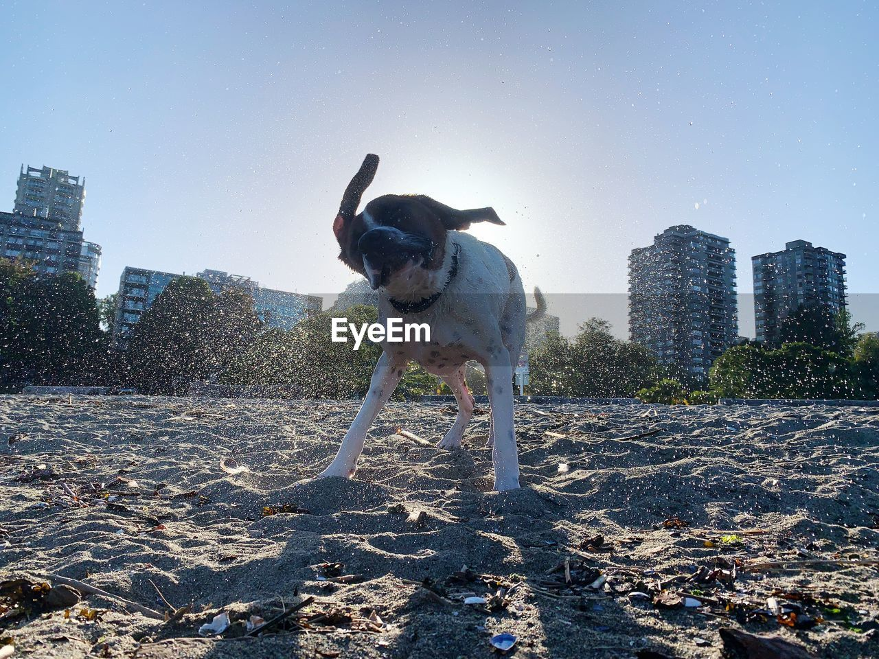 DOG STANDING ON CITY AGAINST SKY