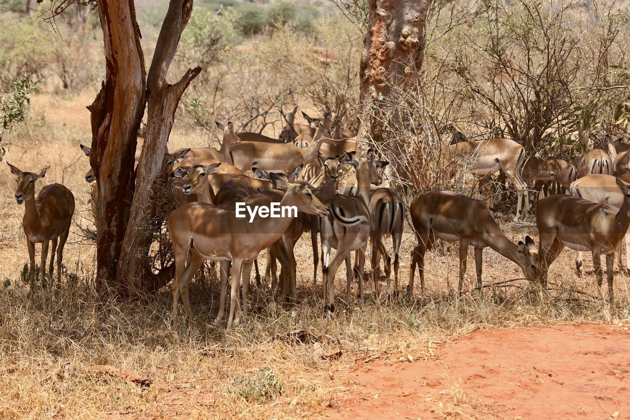 group of animals, animal, animal themes, animal wildlife, animals in the wild, mammal, tree, land, plant, field, deer, large group of animals, vertebrate, nature, no people, herd, day, domestic animals, tree trunk, herbivorous, outdoors