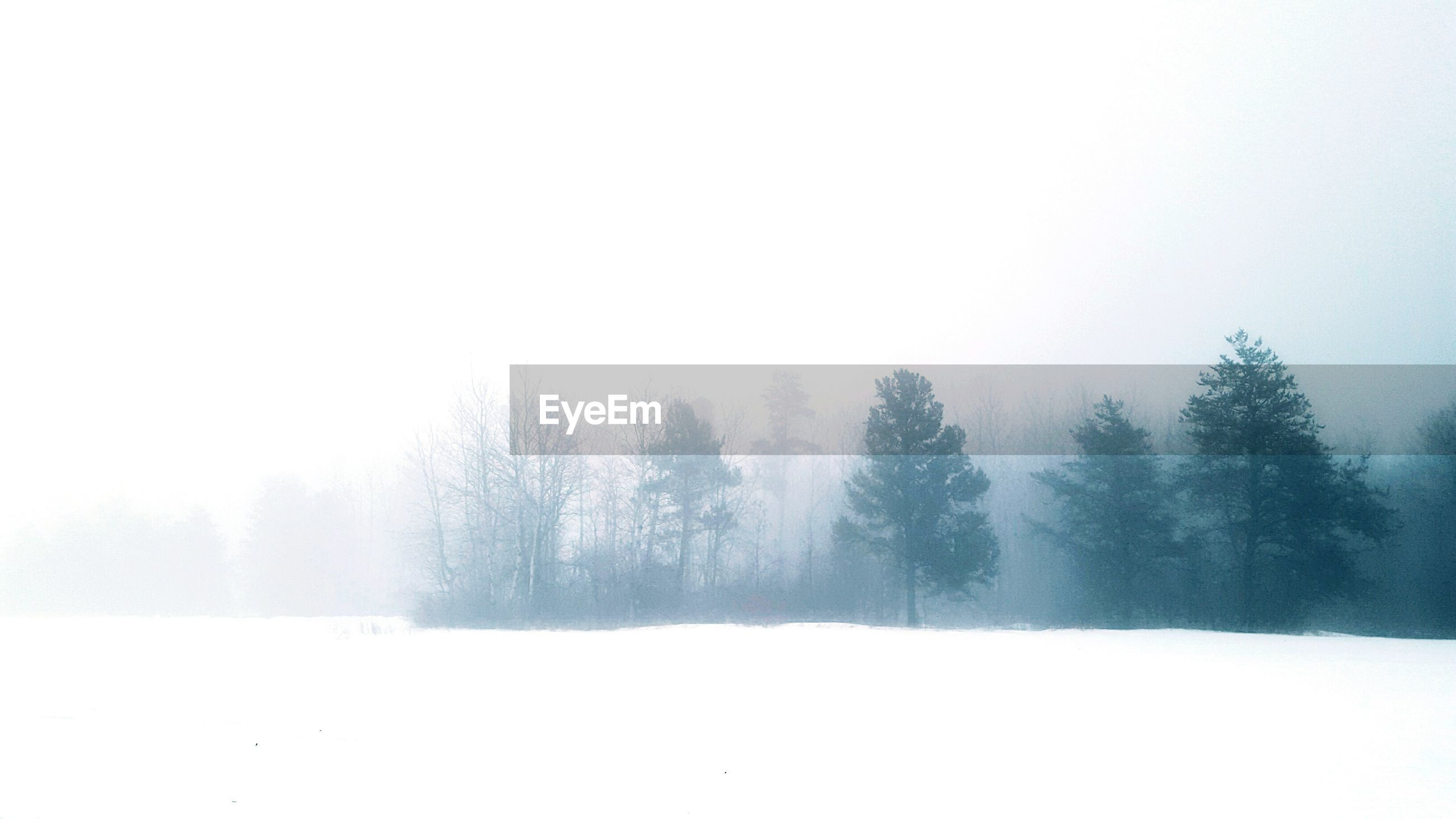 Trees on snow field against sky in foggy weather