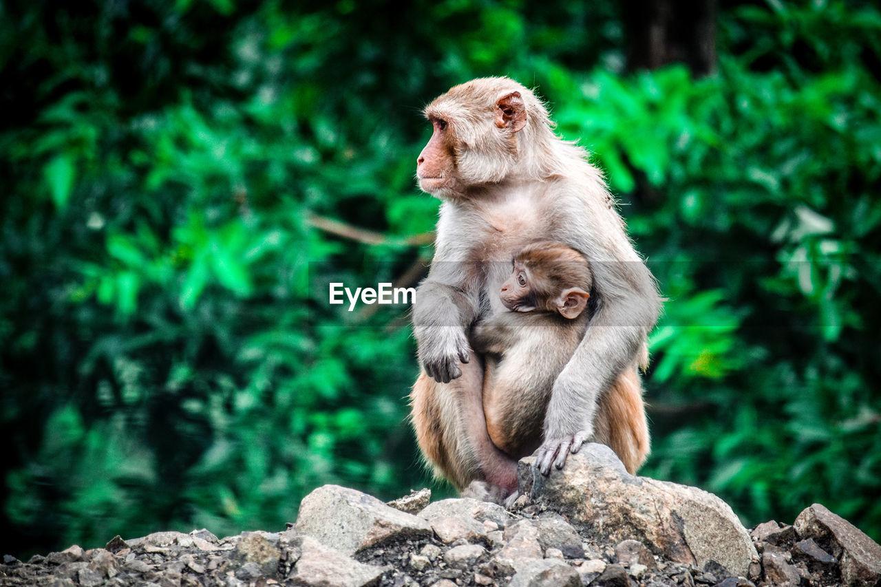 Two Monkeys In The Wild