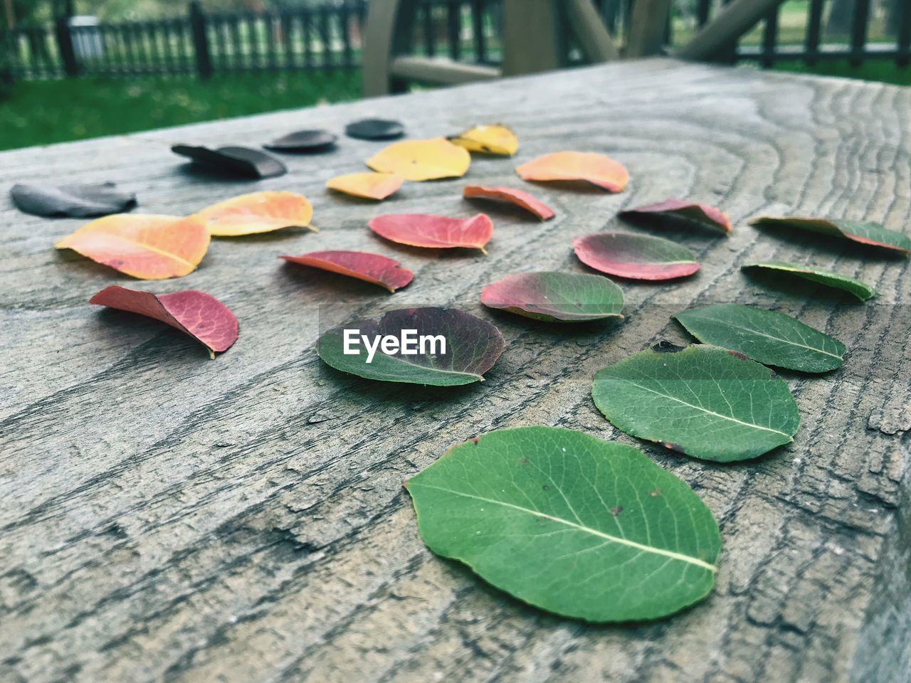 leaf, plant part, leaves, close-up, wood - material, green color, no people, nature, beauty in nature, table, plant, day, still life, outdoors, focus on foreground, freshness, fragility, vulnerability, high angle view, selective focus