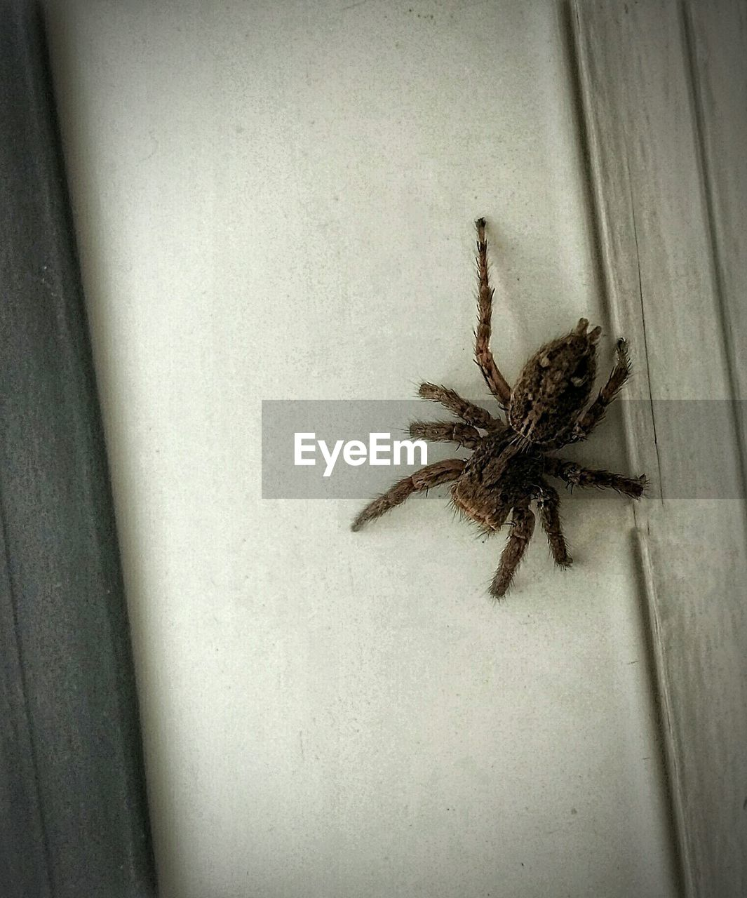 Low angle view of spider on wall