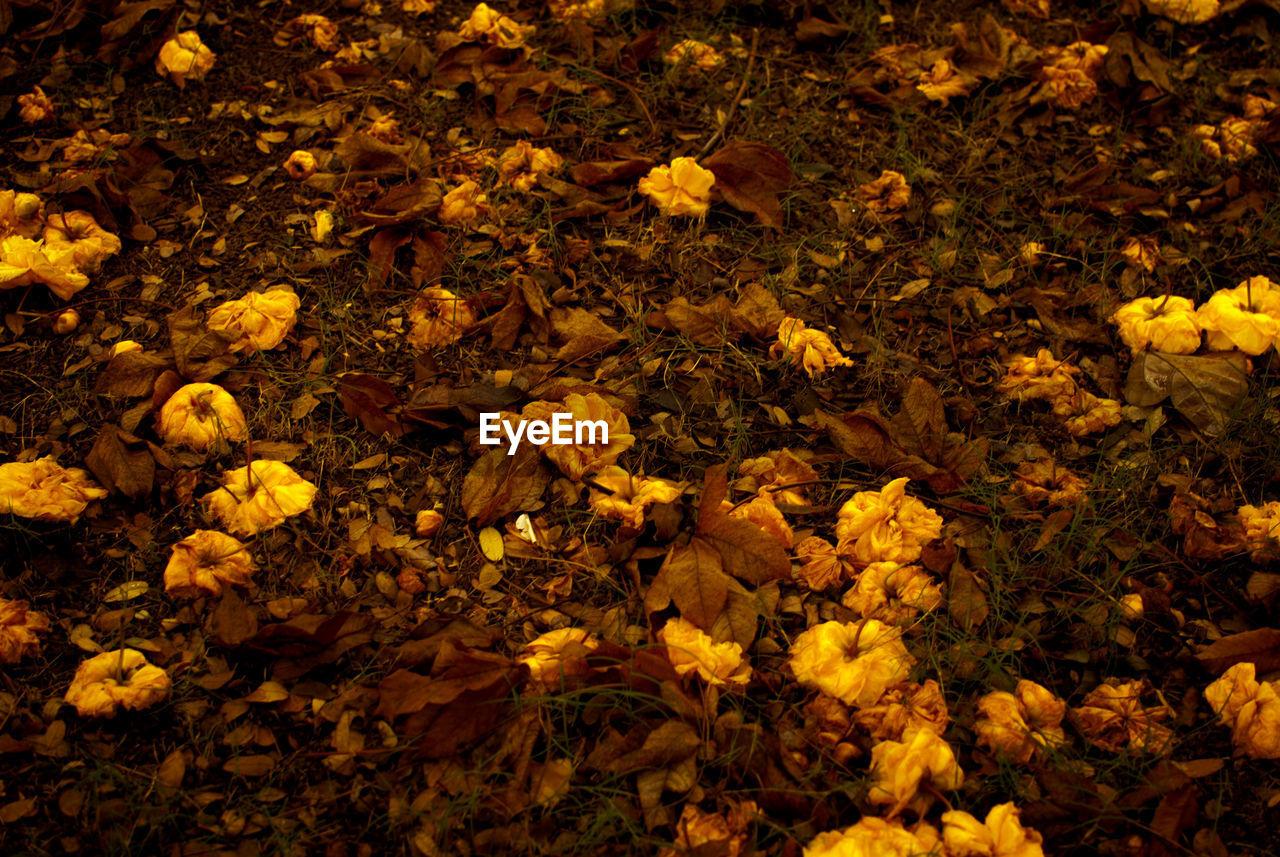 Yellow flowers fallen on field during autumn