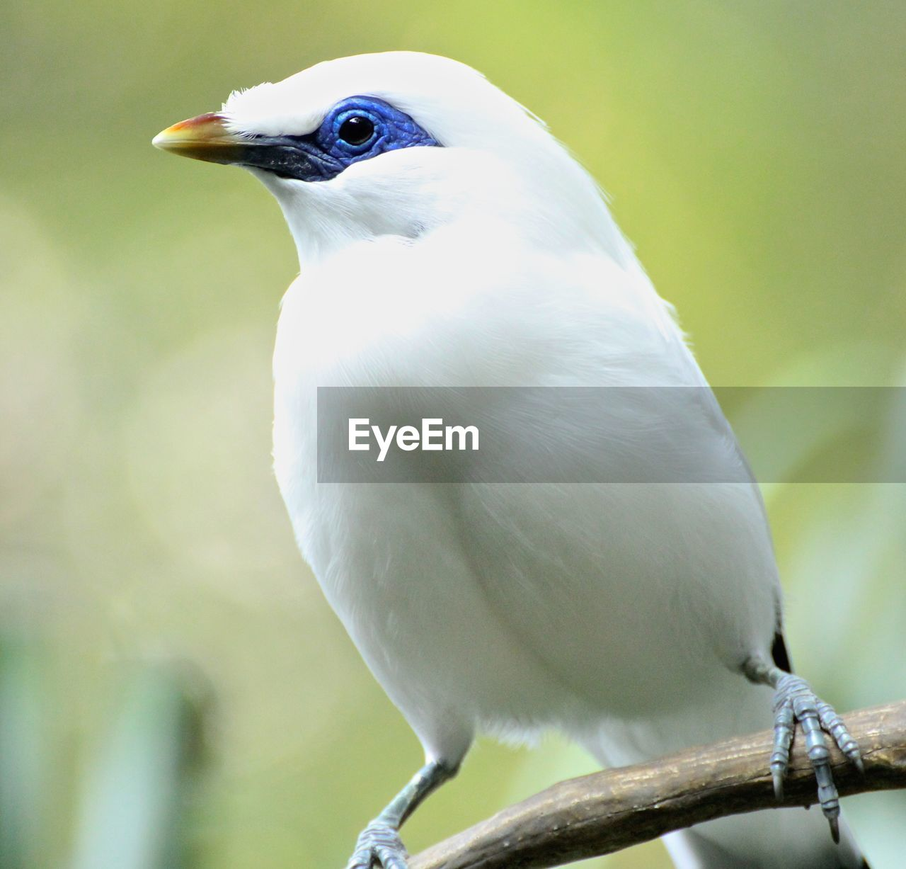 bird, animal themes, vertebrate, animal, one animal, animal wildlife, animals in the wild, perching, focus on foreground, close-up, white color, no people, tree, day, nature, branch, looking, outdoors, plant, looking away, animal eye