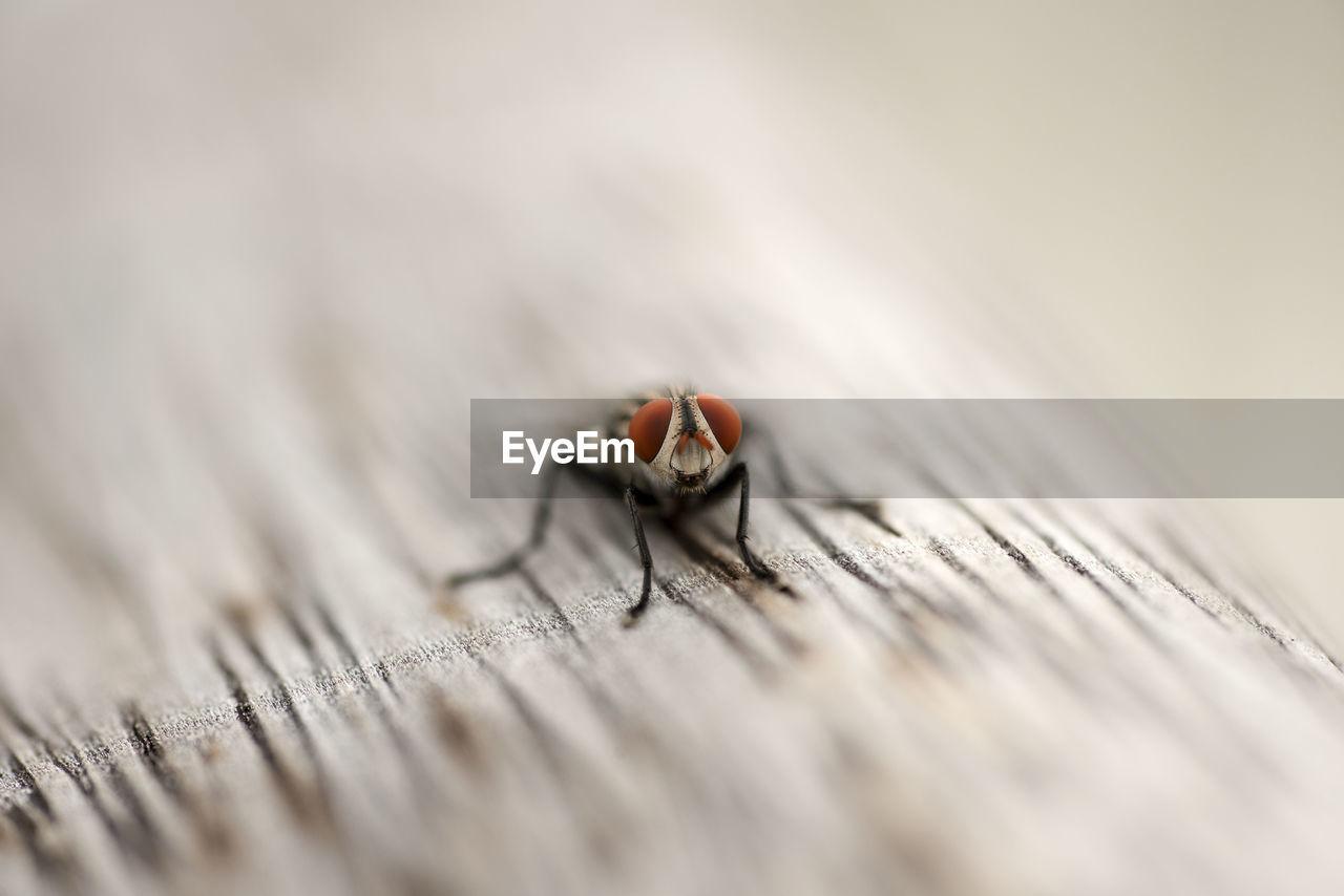 Tilt-Shift Image Of Housefly On Wood