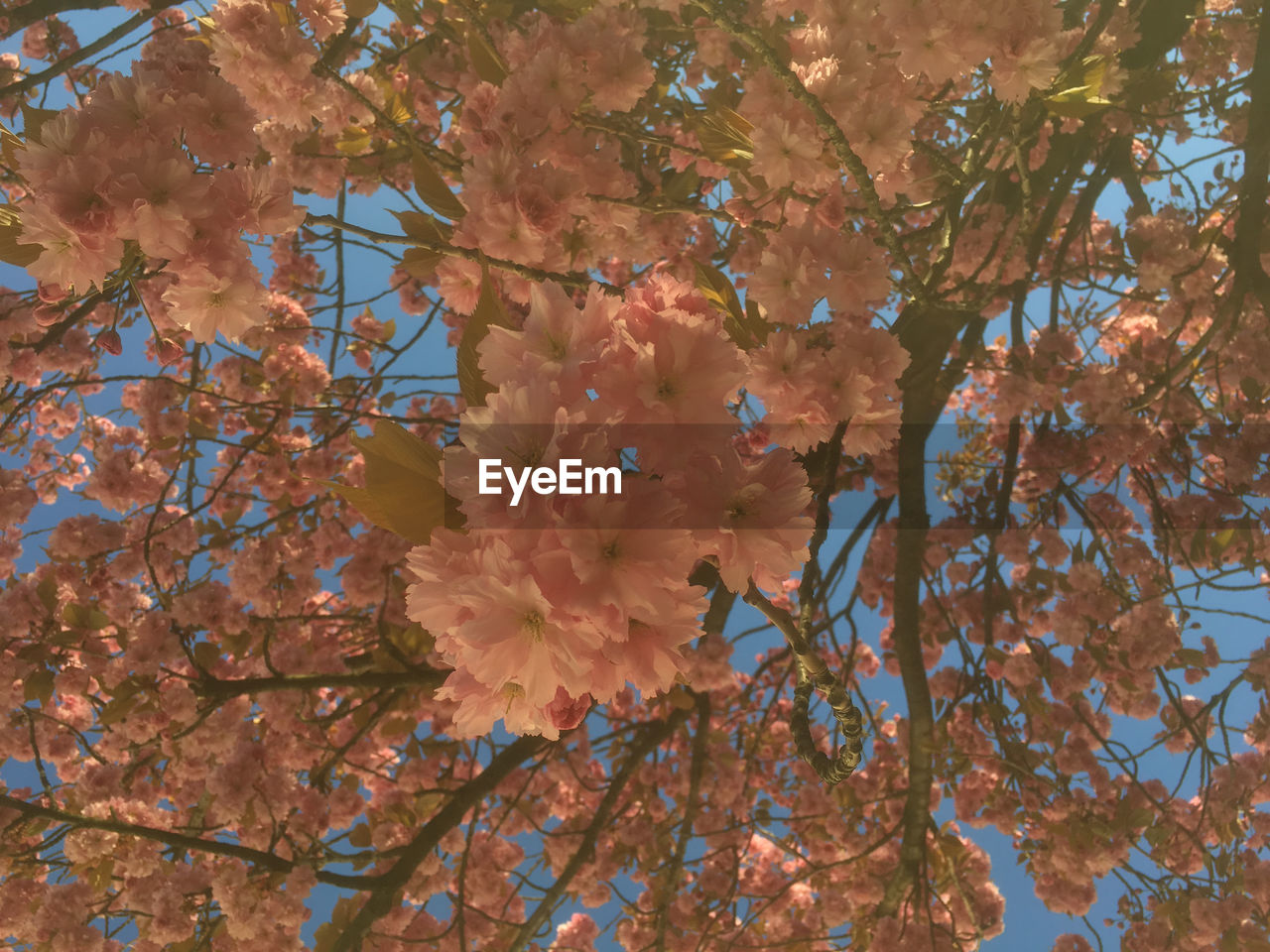 tree, growth, blossom, nature, flower, beauty in nature, branch, bright, relaxed moments, autumn, no people, tissue, fragility, springtime, freshness, outdoors, day