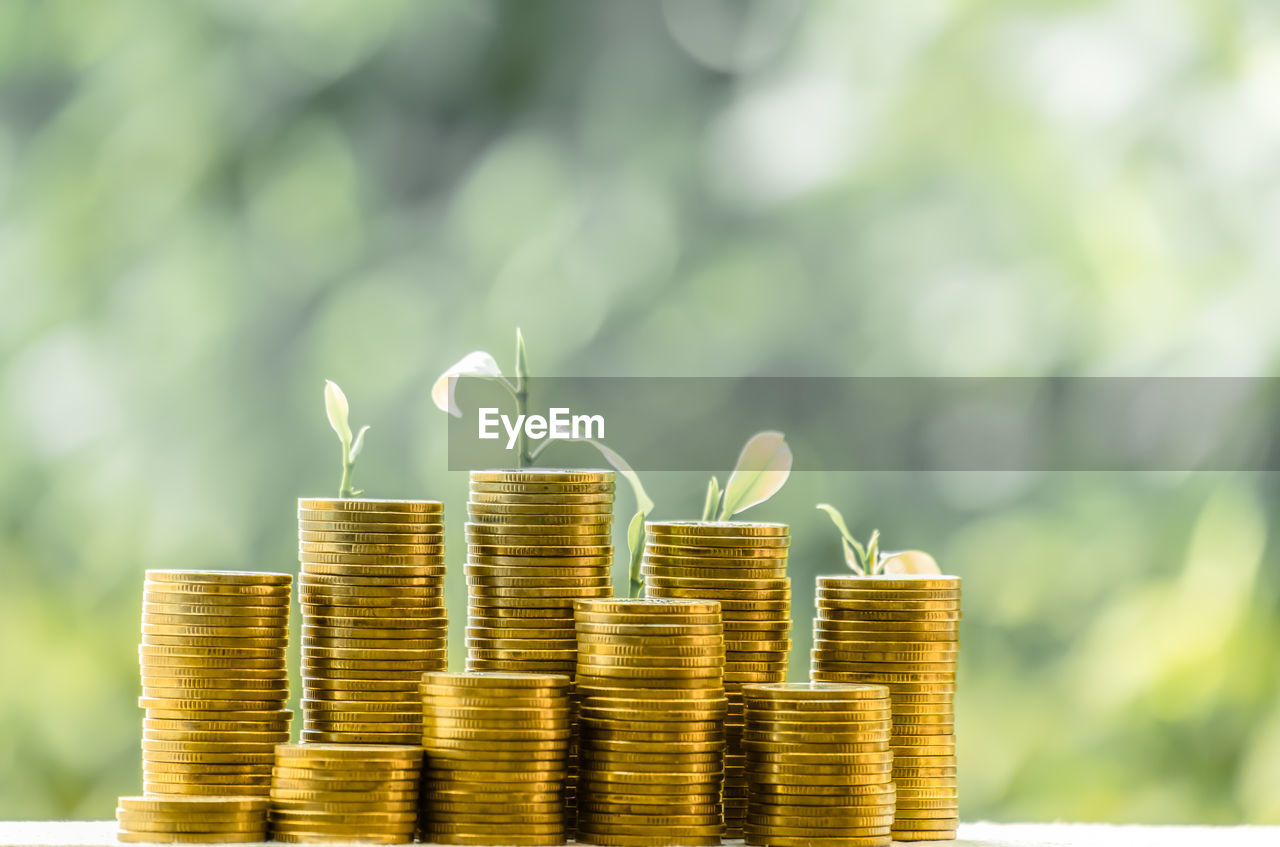 growth, coin, finance, business, savings, nature, wealth, investment, business finance and industry, no people, stack, side by side, currency, focus on foreground, leaf, plant, gold colored, day, plant part, finance and economy, economy