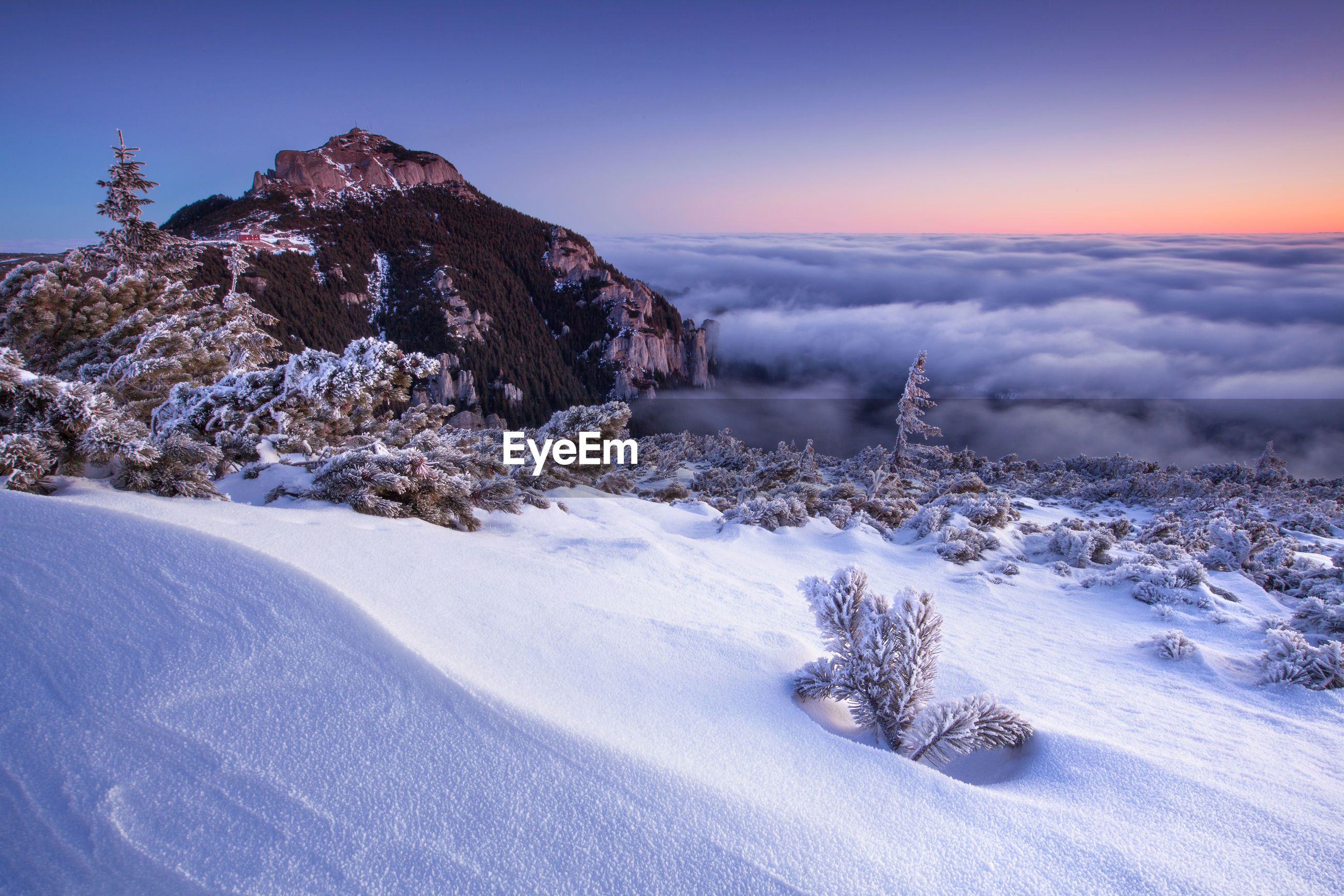 Trees on snow covered landscape against sky during sunrise