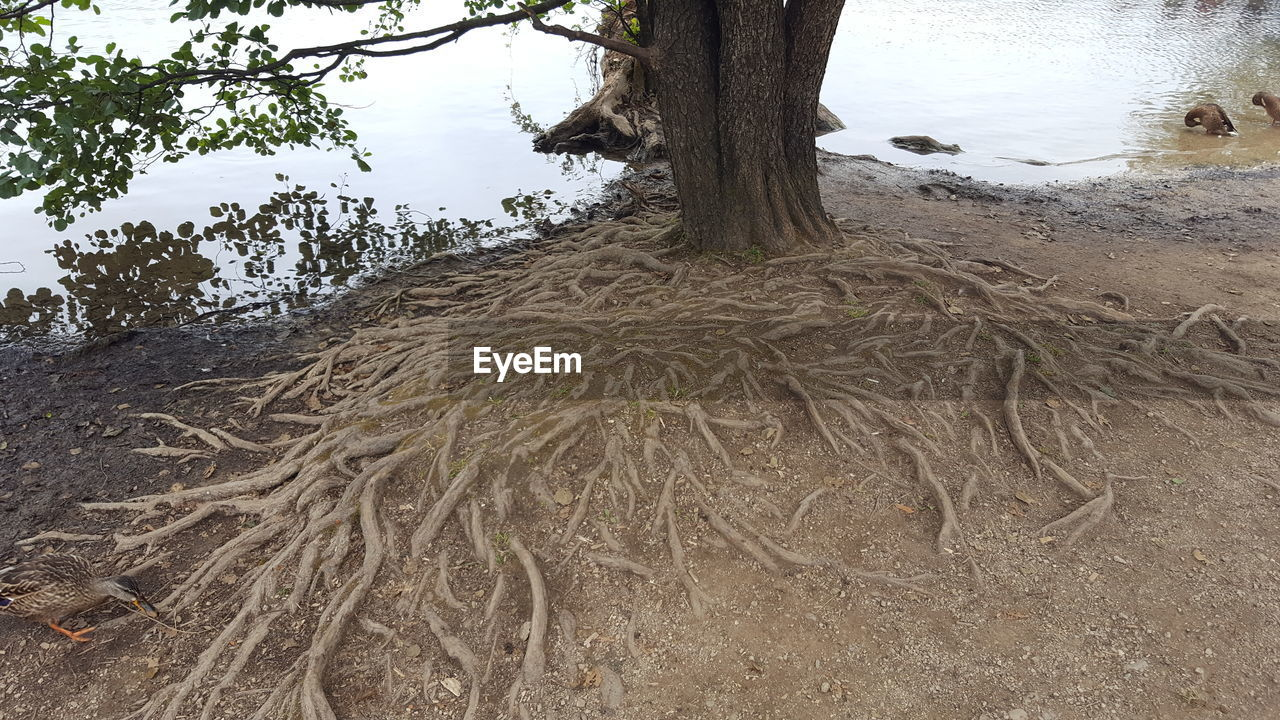 tree, tree trunk, nature, outdoors, growth, tranquility, no people, day, water, beauty in nature, close-up