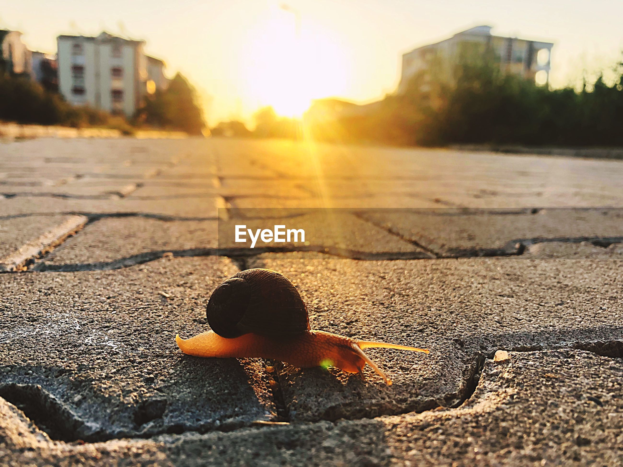 Close-up of snail on footpath during sunset