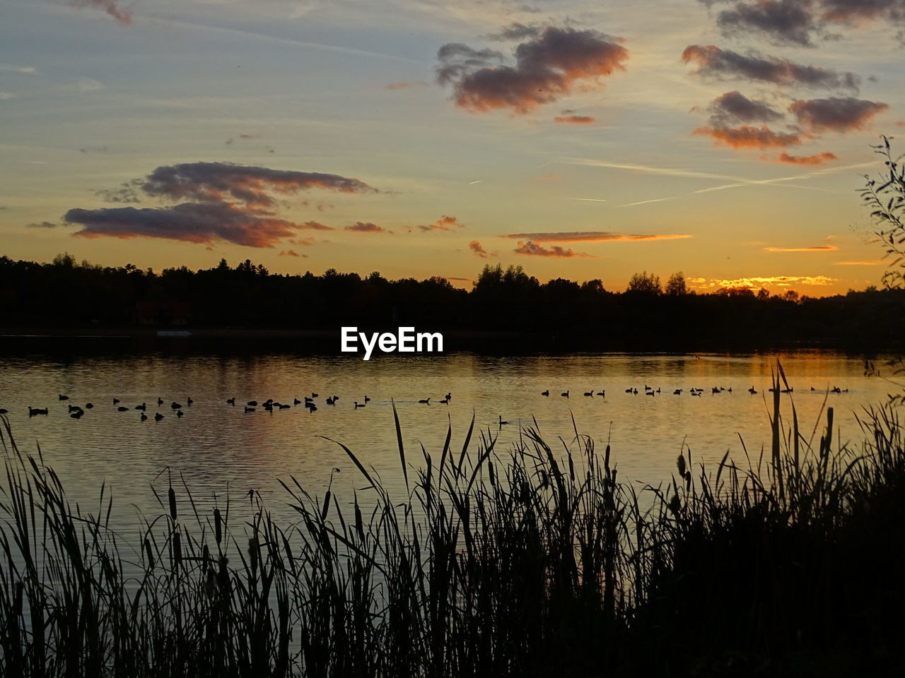 sunset, reflection, lake, water, nature, silhouette, beauty in nature, scenics, tranquil scene, tranquility, sky, no people, outdoors, growth, plant, tree, grass, bird, day