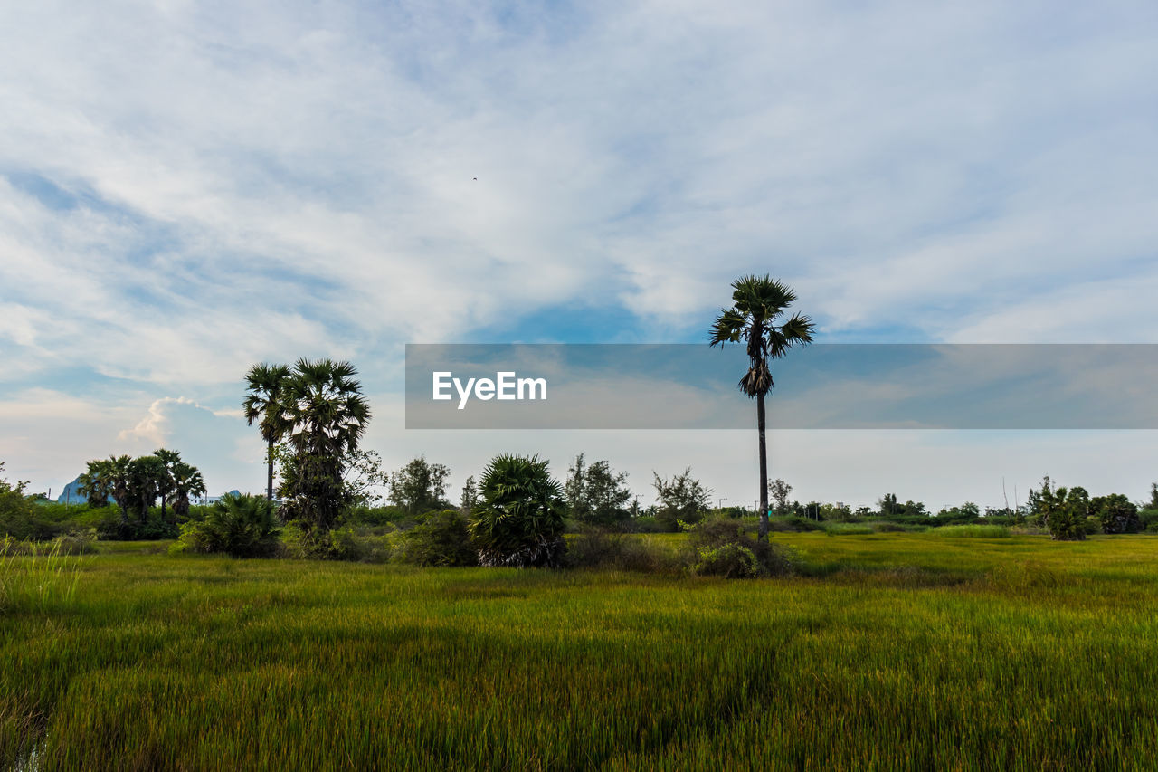 plant, sky, tree, landscape, field, environment, land, cloud - sky, tranquility, growth, tranquil scene, grass, scenics - nature, green color, beauty in nature, nature, no people, rural scene, non-urban scene, day, outdoors