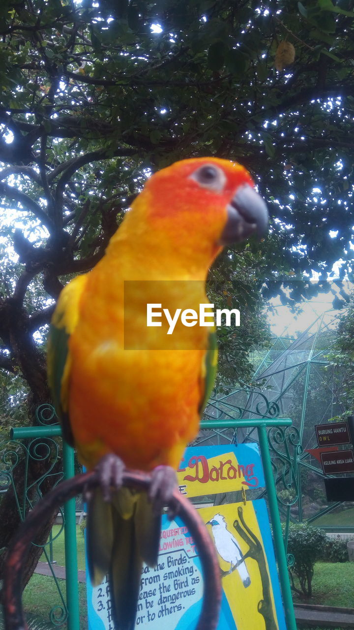 animal themes, vertebrate, animal, bird, one animal, tree, animal wildlife, parrot, animals in the wild, nature, perching, no people, plant, multi colored, day, outdoors, cage, pets, close-up, animals in captivity