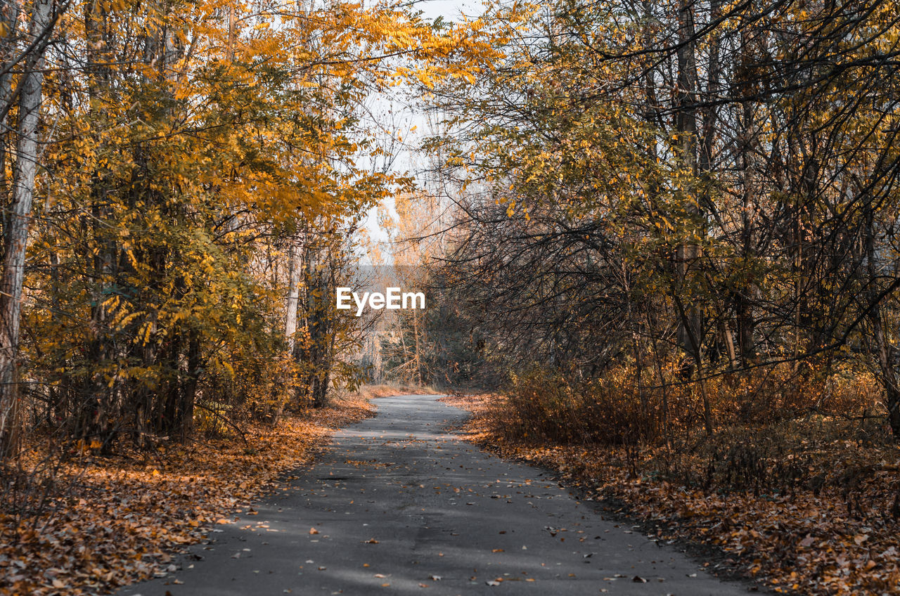DIRT ROAD AMIDST TREES DURING AUTUMN