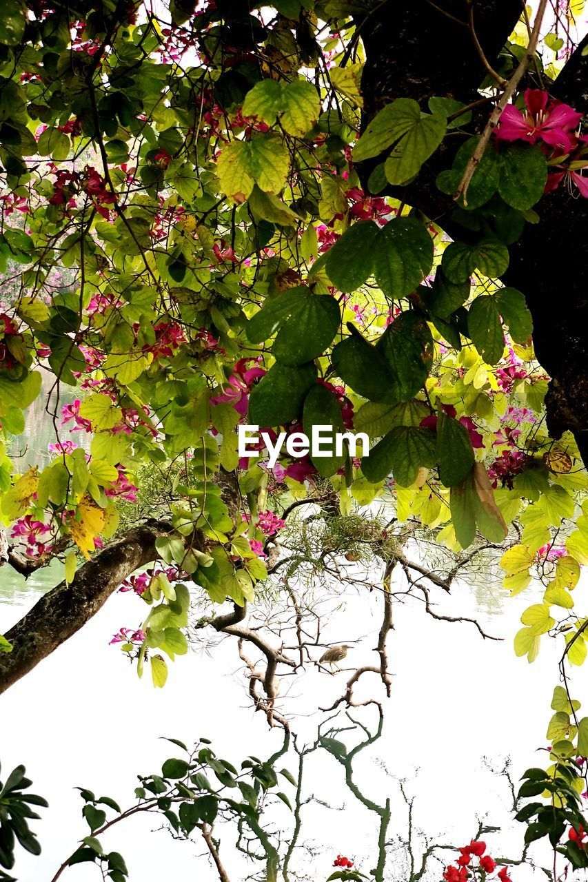 growth, leaf, nature, beauty in nature, plant, tree, branch, freshness, green color, no people, outdoors, fragility, day, flower, close-up
