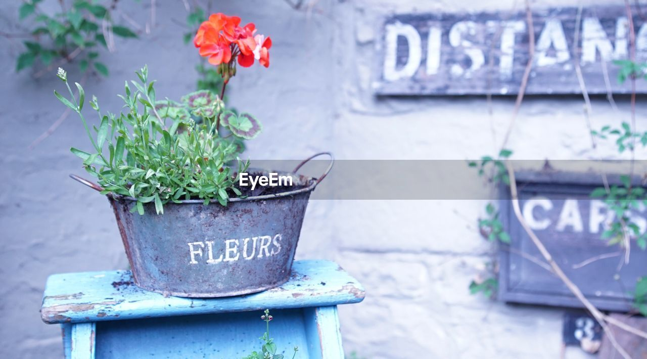 Flower Pot On Table At Yard