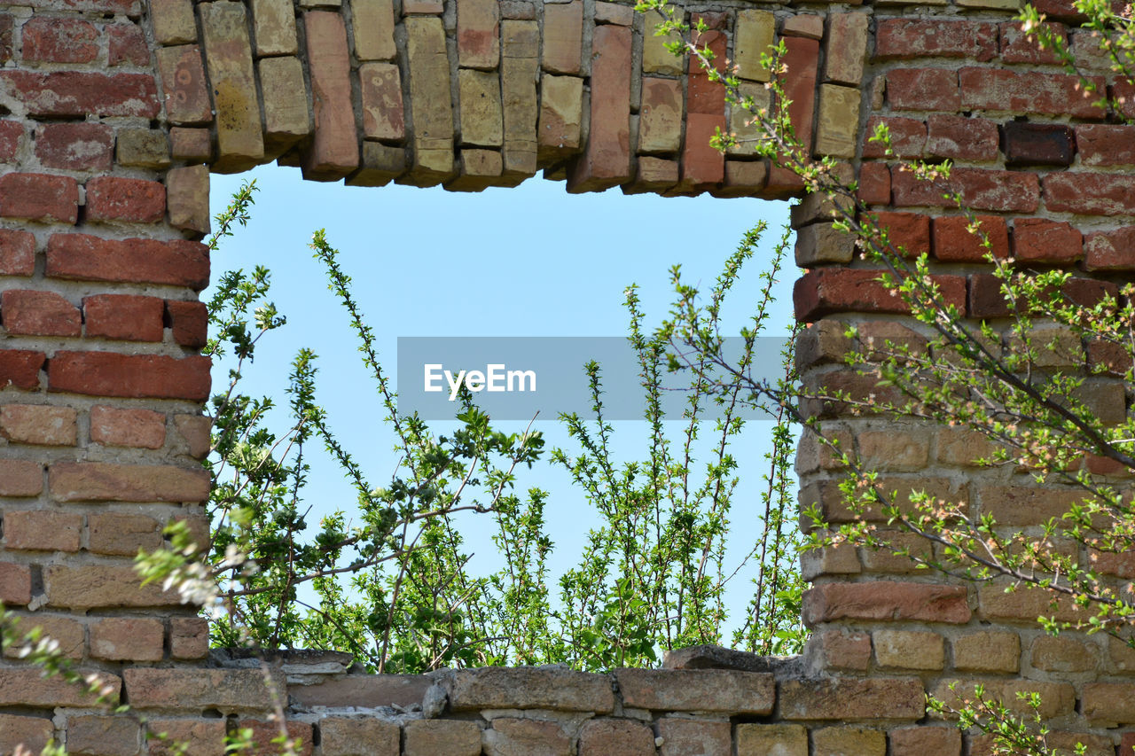 brick, brick wall, architecture, wall, built structure, plant, day, wall - building feature, no people, low angle view, building exterior, growth, nature, green color, sky, old, outdoors, window, ivy, building, stone wall