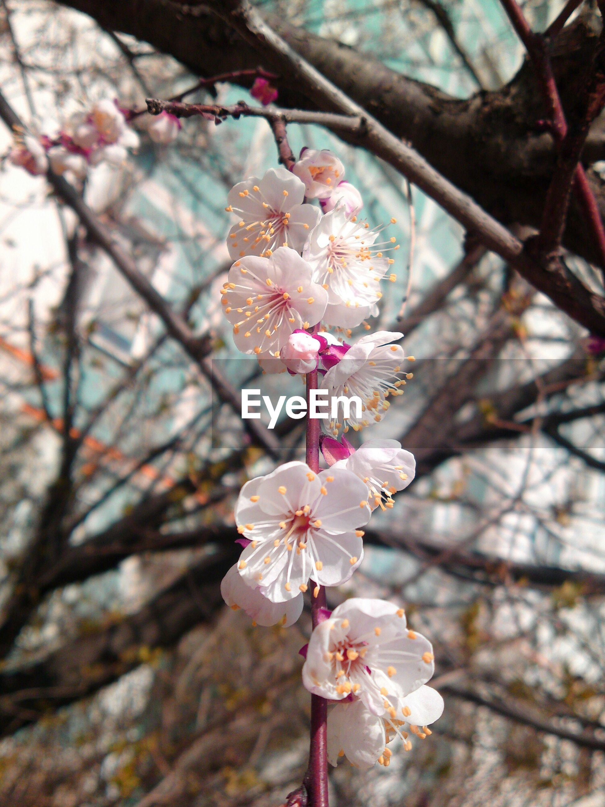 flower, branch, freshness, cherry blossom, tree, fragility, cherry tree, growth, blossom, beauty in nature, apple tree, petal, fruit tree, focus on foreground, nature, twig, orchard, apple blossom, springtime, close-up