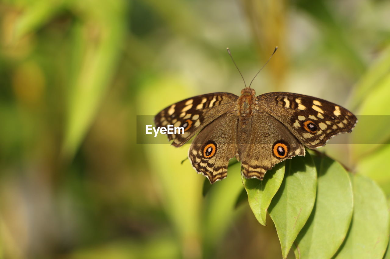 animal wildlife, one animal, animals in the wild, animal themes, animal, insect, invertebrate, animal wing, close-up, butterfly - insect, plant part, leaf, beauty in nature, plant, focus on foreground, nature, day, green color, no people, flower, butterfly, outdoors