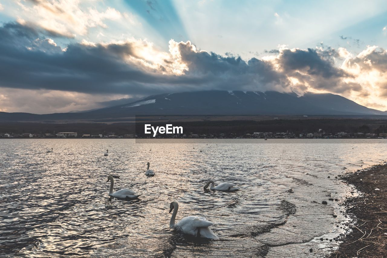 water, cloud - sky, sky, beauty in nature, animal, animal themes, nature, animals in the wild, group of animals, scenics - nature, swimming, animal wildlife, tranquil scene, bird, vertebrate, tranquility, sunset, lake, non-urban scene, no people, outdoors, floating on water, animal family