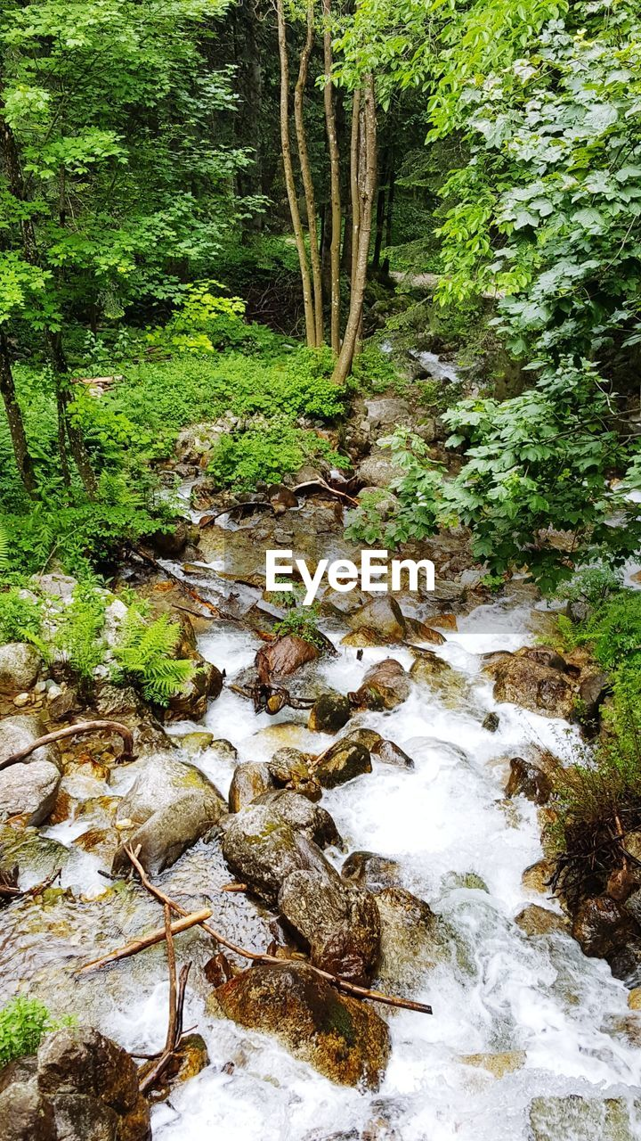 plant, tree, water, forest, nature, downloading, land, beauty in nature, no people, growth, flowing water, day, rock, motion, solid, tranquility, flowing, scenics - nature, green color, stream - flowing water, outdoors, woodland